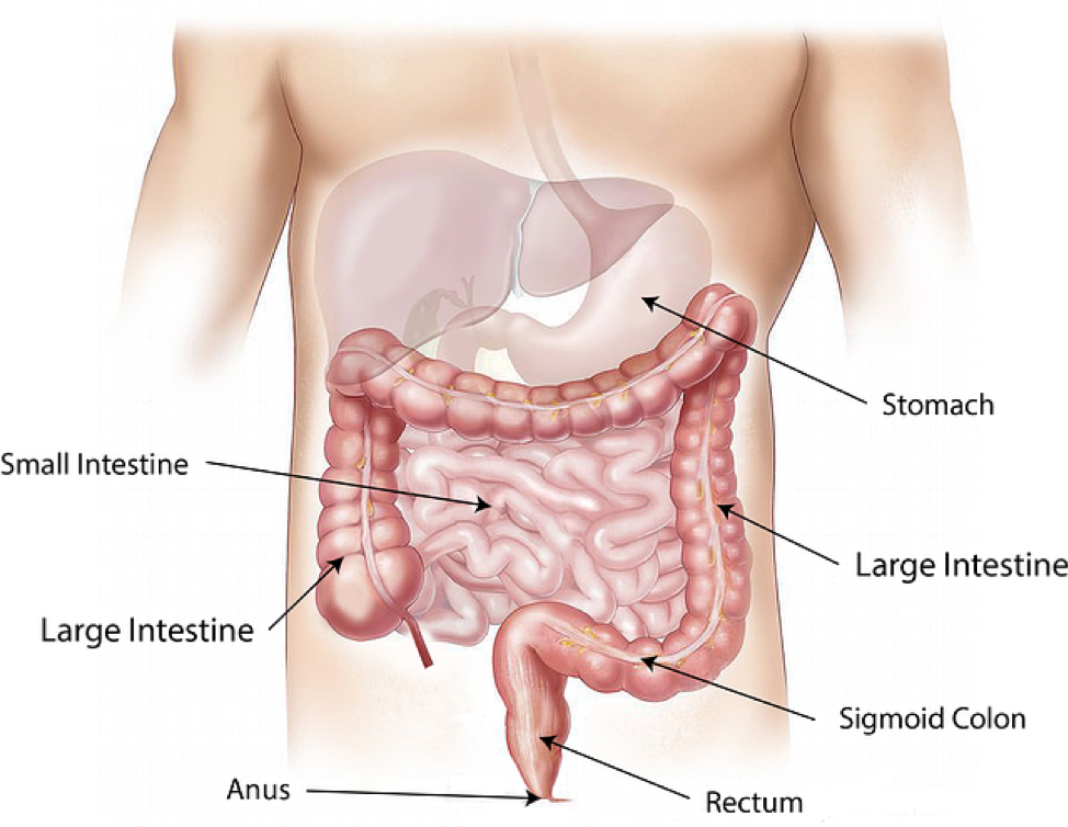 Resection of Colon - Top Surgeons NYC